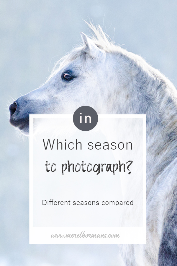 I often get asked which season is best for a photosession. Honestly this is not a question I can easily answer.
