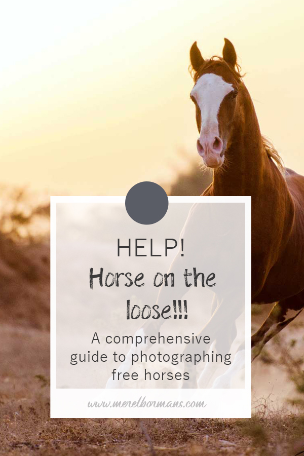 How do those equine photographer do it? The horses running free in the field? Want to learn the secret?