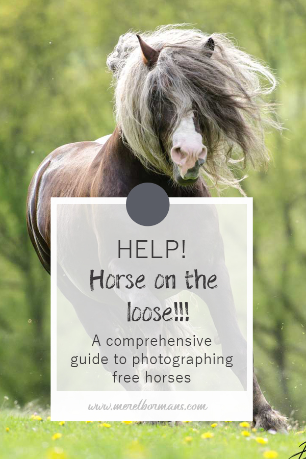 It's really not that hard to make a horse appear to run free, all you need to know is how to do it!