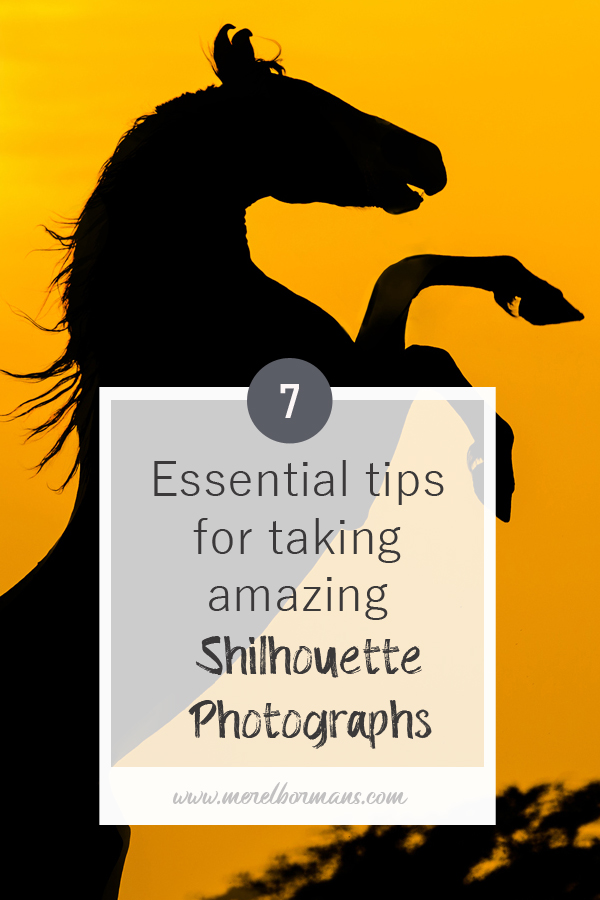 Ever wanted to know how those silhouette photographs are taken? Read these 7 essential tips!