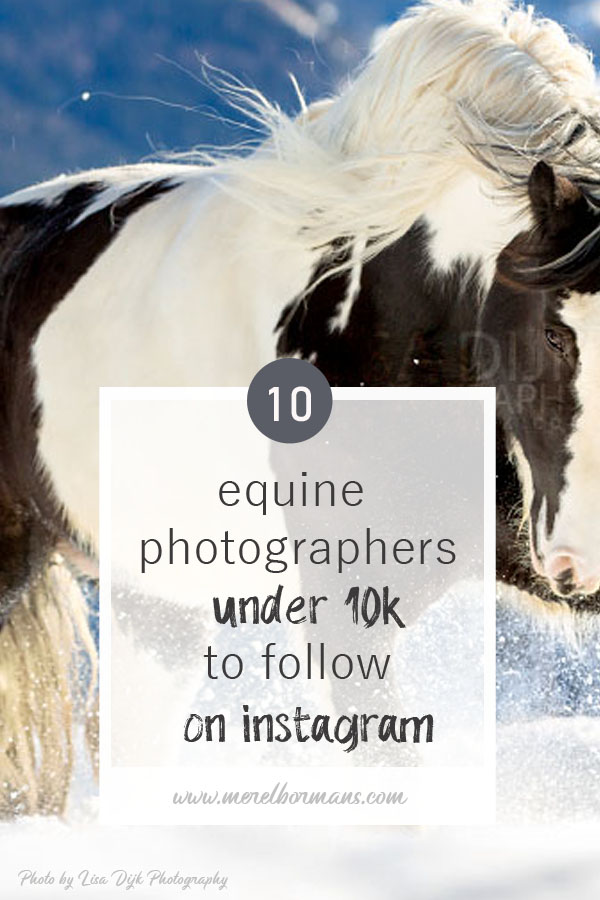 ten equine photographers to follow on instagram? Read my blogpost!