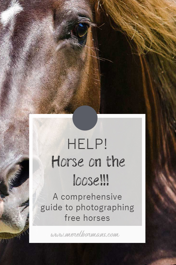 Have you ever wondered how those photo's with horses running free are made? You can read it in this blogpost!