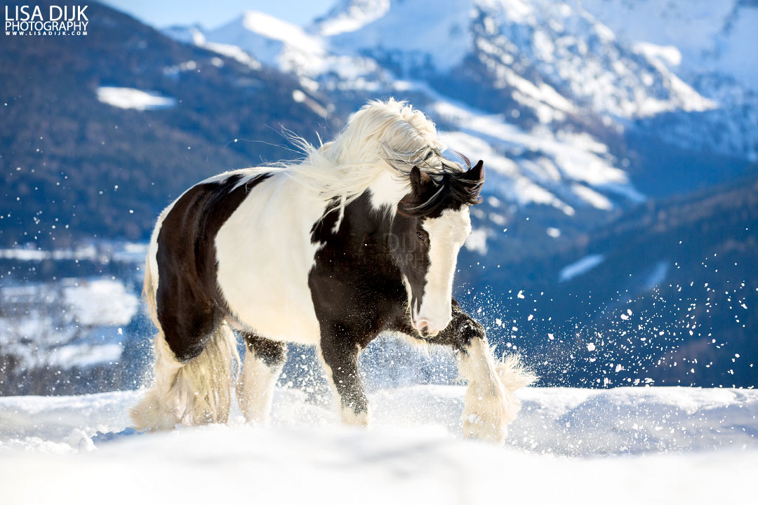 You should follow these 10 equine photography accounts under 10k on instagram